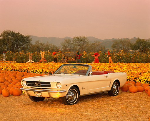 MST 01 RK0304 01 © Kimball Stock 1964 1/2 Ford Mustang Convertible White 3/4 Front View At Pumpkin Patch
