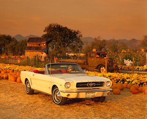 MST 01 RK0305 04 © Kimball Stock 1964 1/2 Ford Mustang Convertible White 3/4 Front View At Pumpkin Patch Filtered