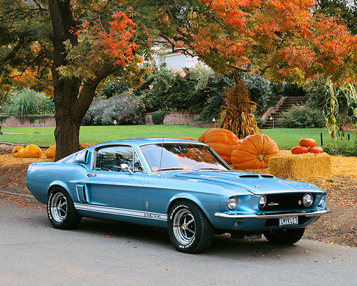 MST 03 RK0118 01 © Kimball Stock 1967 Ford Mustang Shelby GT500 Blue 3/4 Side View On Pavement By Pumpkins And Autumn Trees