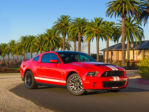 MST 03 RK0903 01 © Kimball Stock 2011 Shelby Ford Mustang GT500 SVT Red With White Stripes 3/4 Front View On Pavement By Palm Trees