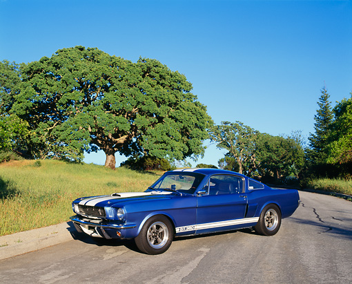MST 03 RK0085 14 © Kimball Stock 1966 Ford Mustang Shelby GT 350 Blue White Stripes 3/4 Side View On Pavement By Grass And Trees