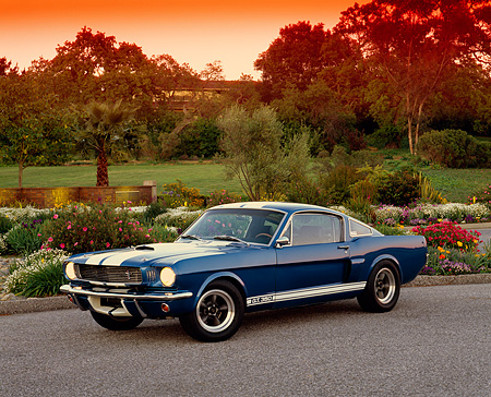 MST 03 RK0088 04 © Kimball Stock 1966 Ford Mustang Shelby GT 350 Blue 3/4 Front View On Pavement By Flowers And Trees
