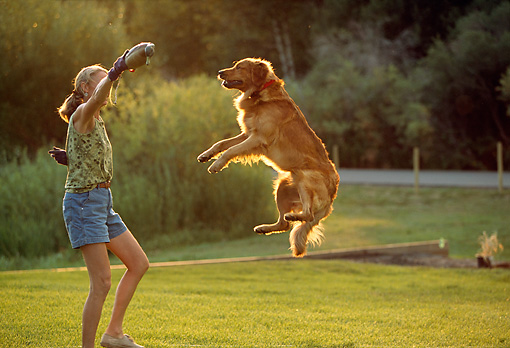 PEO 02 DB0004 01 © Kimball Stock Golden Retriever With Owner Jumping In Air