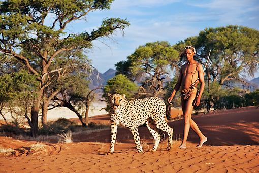 PEO 08 MH0006 01 © Kimball Stock San Hunter Walking With Traditional Bow And Arrow And Cheetah Namibia