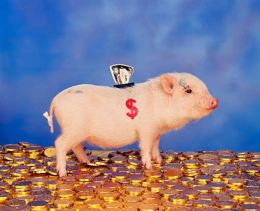 PIG 01 RK0081 05 © Kimball Stock Piggy Bank