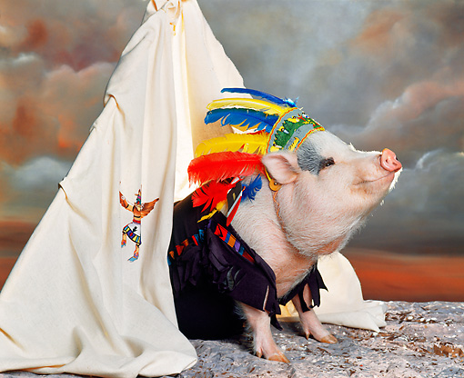 PIG 01 RK0135 17 © Kimball Stock Chief Sitting Pig In Teepee