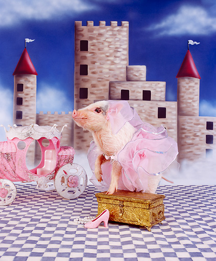 PIG 01 RK0218 02 © Kimball Stock Pigarella Pig In Pink Tutu By Castle And Carriage