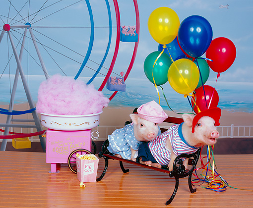 PIG 01 RK0237 01 © Kimball Stock Boar-dwalk Two Little Pigs On Bench By Cotton Candy Machine And Ferris Wheel