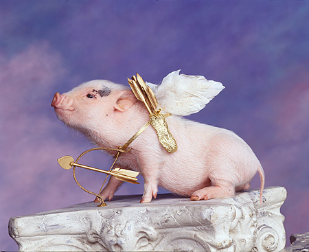 PIG 01 RK0052 02 © Kimball Stock Vietnamese Pot Belly Cupid Pig Wearing Wings With Bow And Arrow On Pedastal