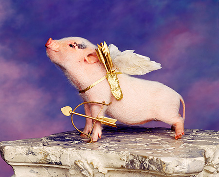 PIG 01 RK0052 17 © Kimball Stock Vietnamese Pot Belly Cupid Pig Wearing Wings With Bow And Arrow On Pedastal