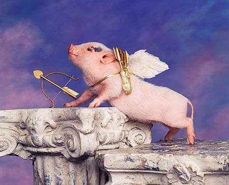 PIG 01 RK0052 20 © Kimball Stock Vietnamese Pot Belly Cupid Pig Wearing Wings With Bow And Arrow On Pedastal