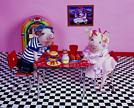 PIG 01 RK0233 07 © Kimball Stock Hoggy Diner Two Pigs At Table On Checkered Floor By Juke Box