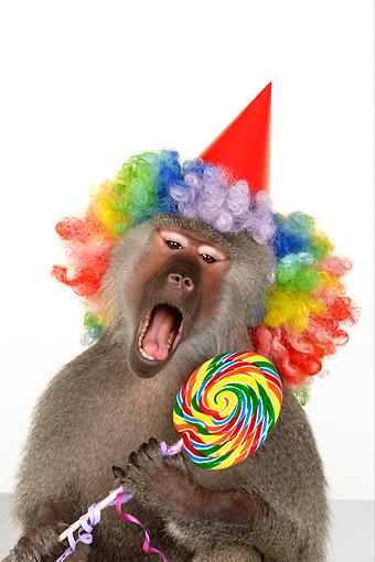 animals wearing birthday hats - photo #4