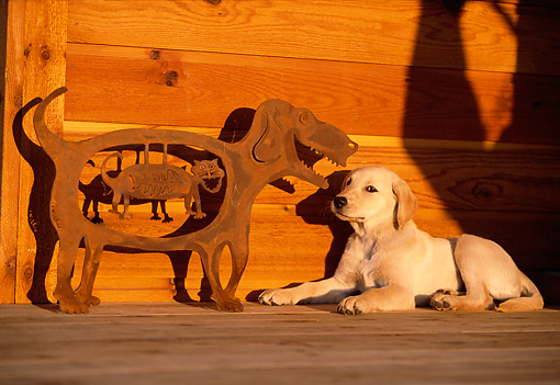PUP 05 DB0018 01 © Kimball Stock Yellow Labrador Retriever Puppy Laying On Porch With Metal Sculpture Of Dog