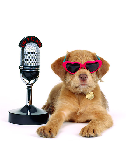 PUP 07 RK0014 02 © Kimball Stock Mutt Puppy Wearing Sunglasses Laying By Microphone On White Seamless