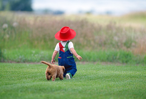 PUP 08 DS0007 01 © Kimball Stock Golden Retriever Puppy Following Child Across Grass