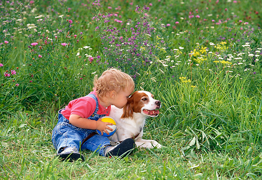 PUP 10 KH0001 01 © Kimball Stock Brittany Spaniel Puppy And Child Sitting In Grass