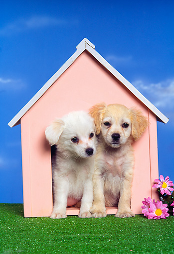 Two Puppies Sitting In Dog House Kimballstock