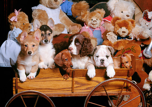 PUP 11 RK0024 11 © Kimball Stock A Group Of Puppies In Wooden Wagon With Bears