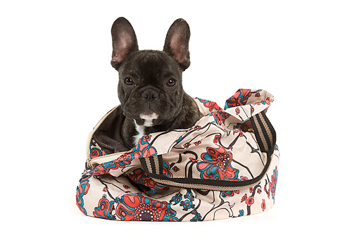PUP 18 JE0002 01 © Kimball Stock French Bulldog Puppy Peeking Out Of Floral Bag Seamless