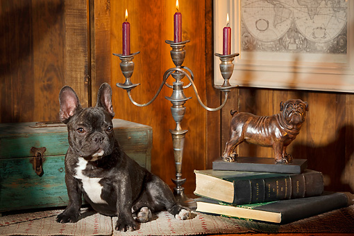 PUP 18 JE0012 01 © Kimball Stock French Bulldog Puppy Sitting By Candelabra And Books
