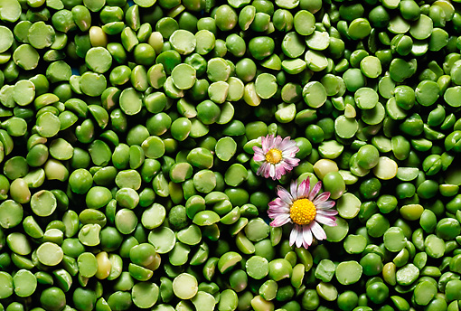 PUZ 01 RC0002 01 © Kimball Stock Split Peas With Flowers