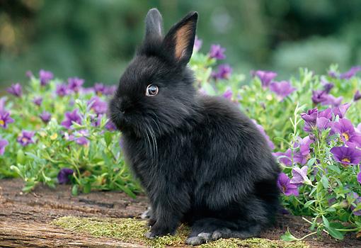 BUNNY RABBITS - Animal Stock Photos - Kimballstock