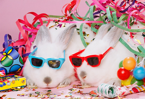 RAB 01 RK0050 01 © Kimball Stock Two White Rabbits Wearing Sunglasses With Party Decorations