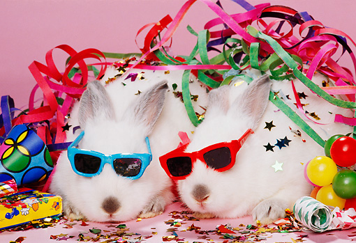 RAB 01 RK0050 07 © Kimball Stock Two White Rabbits Wearing Sunglasses With Party Decorations