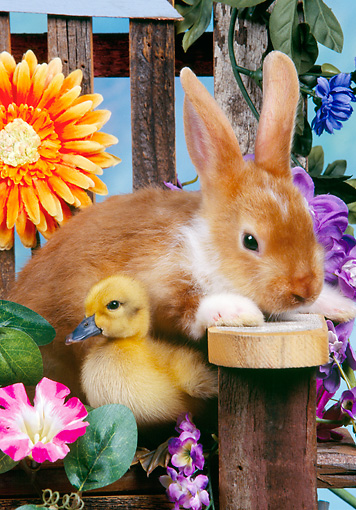 RAB 02 RK0002 01 © Kimball Stock Rabbit And Duckling Sitting On Flower Decorated Chair