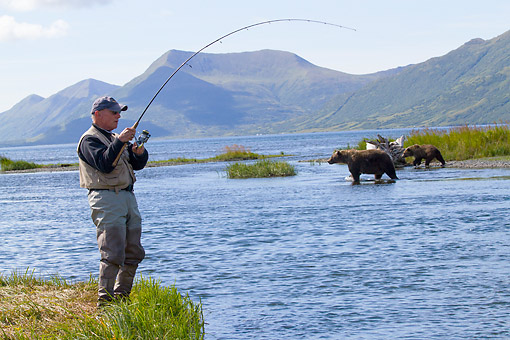 REC 04 LS0001 01 © Kimball Stock Fisherman Concentrating On Running Coho While Grizzly Bears Cross Stream In Olga Bay, Alaska