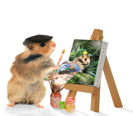 ROD 01 JE0004 01 © Kimball Stock Golden Hamster Painting Portrait On White Seamless