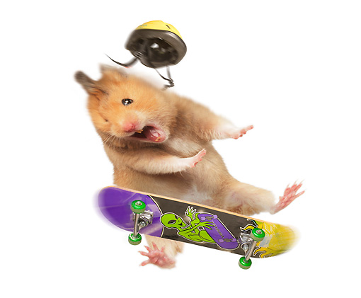 ROD 01 JE0006 01 © Kimball Stock Golden Hamster Falling Off Skateboard On White Seamless