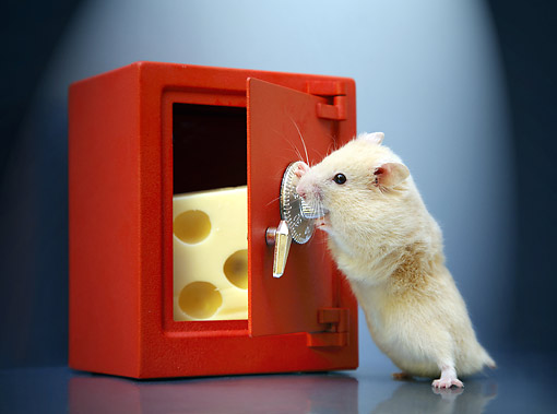 ROD 01 XA0006 01 © Kimball Stock Hamster Stealing Cheese From A Safe