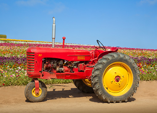 TRA 01 RK0179 01 © Kimball Stock 1953 Massey Harris 33 Tractor Red And Yellow Profile View On Dirt By Field Of Flowers