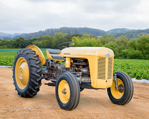 TRA 01 RK0435 01 © Kimball Stock 1960 Ferguson 35 Tractor Yellow 3/4 Front View On Farm