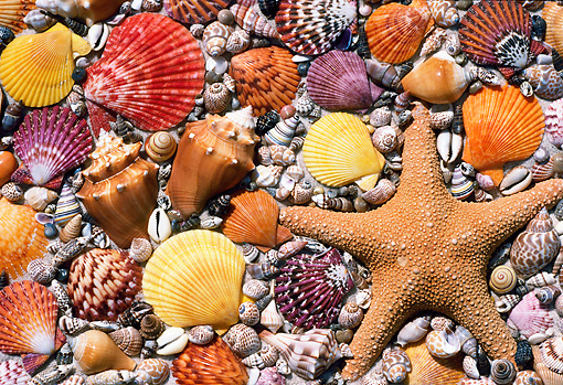 UWC 01 GR0001 01 © Kimball Stock Seashells And Starfish