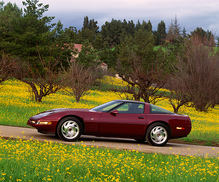 VET 04 RK0002 04 © Kimball Stock 1993 Chevrolet Corvette Anniversary Edition Burgundy 3/4 Front View On Pavement By Yellow Flowers