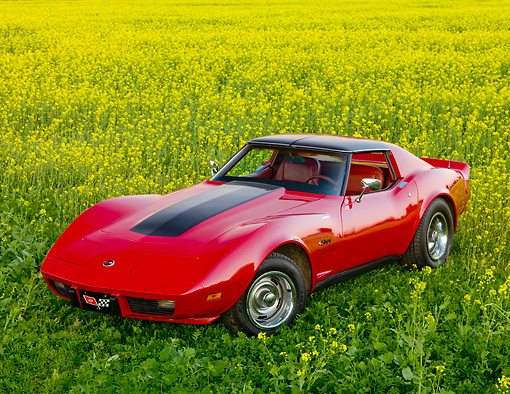 VET 05 RK0196 01 © Kimball Stock 1976 Chevrolet Corvette Stingray Red And Black 3/4 Front View In Field Of Yellow Wildflowers