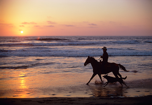 WRG 01 RC0001 01 © Kimball Stock Wrangler Cantering Horse On Beach With Dog At Sunset