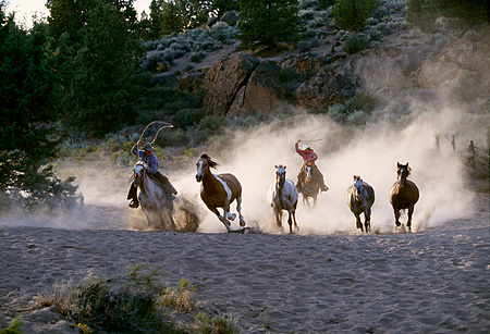 WRG 01 RK0037 02 © Kimball Stock Wranglers On Horses Galloping In Dust