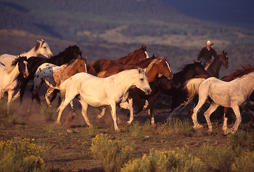 WRG 01 RK0156 01 © Kimball Stock Wranglers And Horses On Pasture