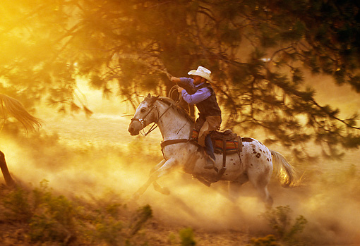 WRG 01 RK0283 06 © Kimball Stock Profile Of Wrangler Lassoing Horse By Trees Dusty