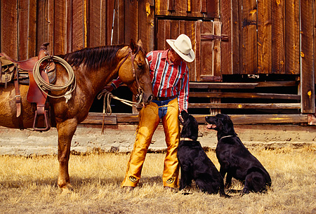 WRG 02 RK0081 08 © Kimball Stock Wrangler Burt Standing With Two Dogs And Horse By Barn