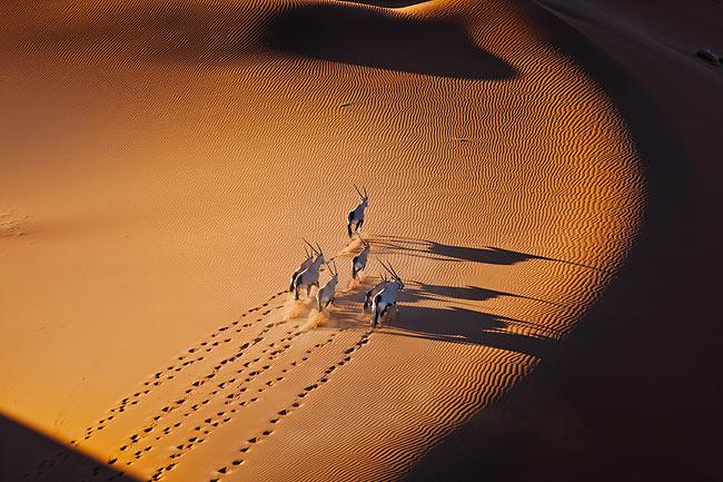 namib - Animal Stock Photos - Kimballstock