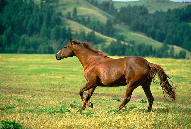 quarter horse - Animal Stock Photos - Kimballstock en 2020