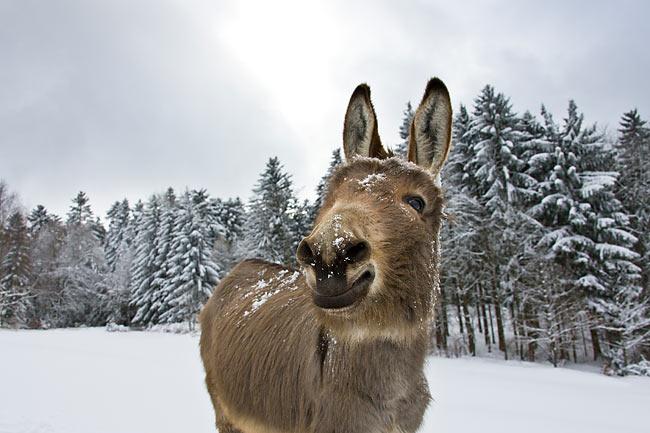 scratching - Animal Stock Photos - Kimballstock