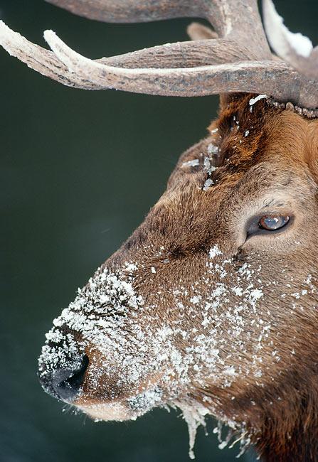 donkey - Animal Stock Photos - Kimballstock